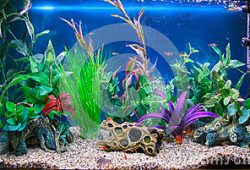 Selecting the right Tropical Aquarium Fish Tank