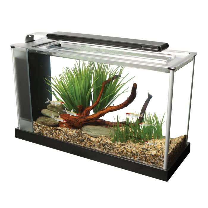 Fish For Your 5 Gallon Fish Tank