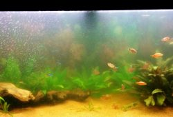What Causes A Cloudy Fish Tank