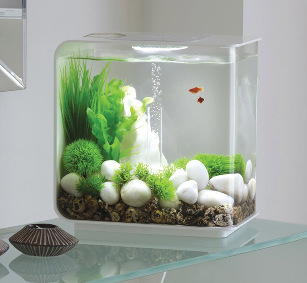Lifetime Acrylic Fish Tank