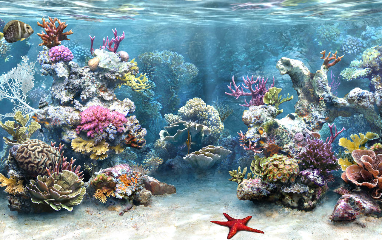 Best Reversible Aquarium Background