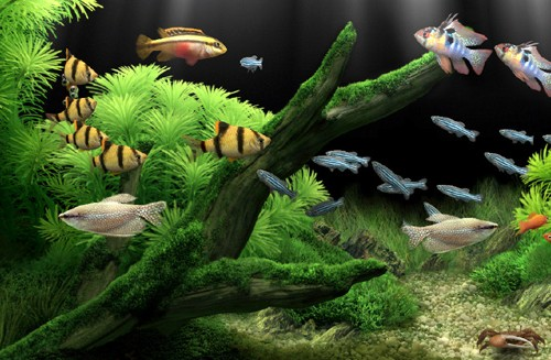 Choosing Your Aquarium Freshwater Fish
