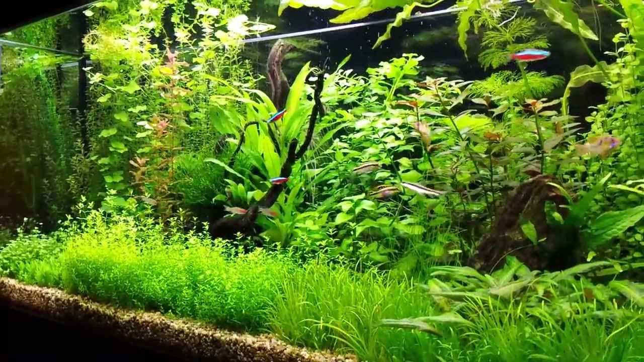 PROS & CONS of Aquarium Plants