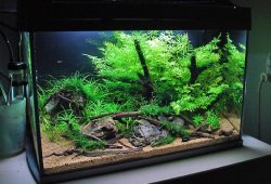 The Easiest Steps of Aquarium Setup