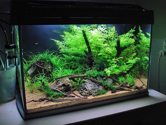 The easiest steps of aquarium setup some tips hints and for Freshwater fish tank setup