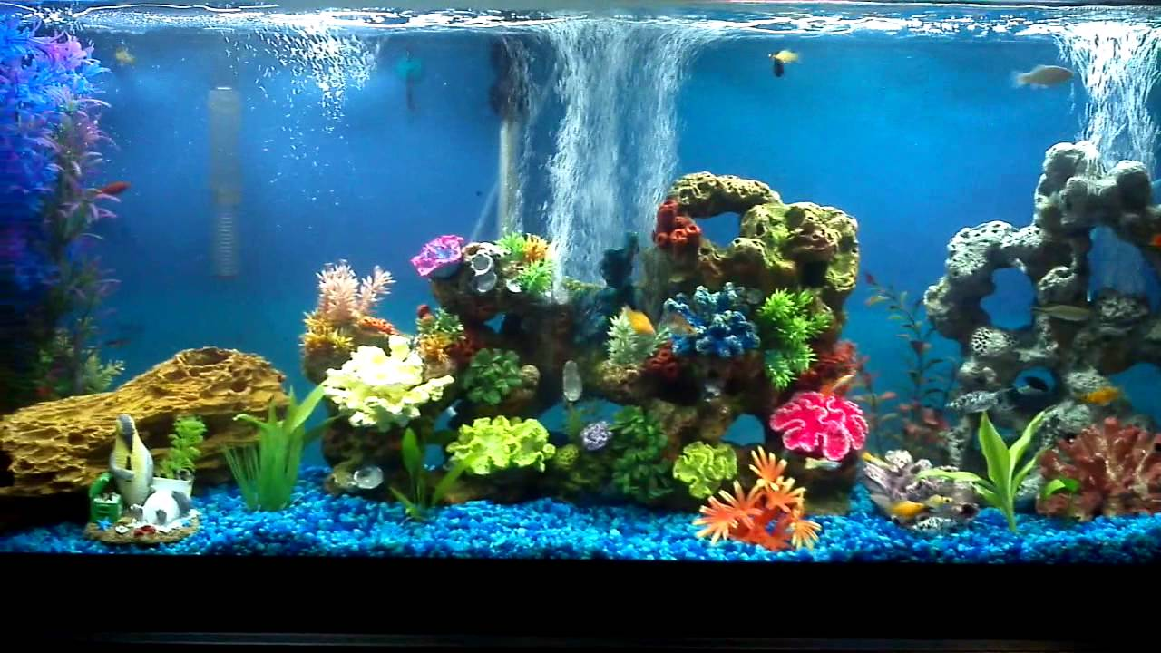Fish aquarium guide - Beginners Guide To Aquariums