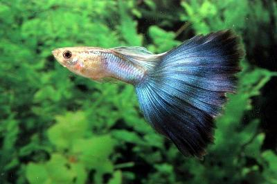 Choose Your Best Pet Fish Types