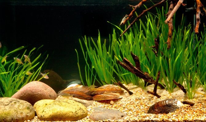 Resources for Biotope Aquaria: plants by continent of origin