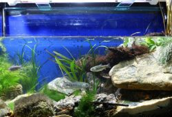 The Biotope Aquarium Design