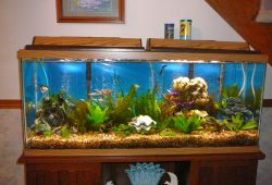 Change Aquarium Water The Right Way