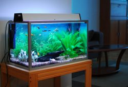 Cheap Aquariums for Marine Lovers
