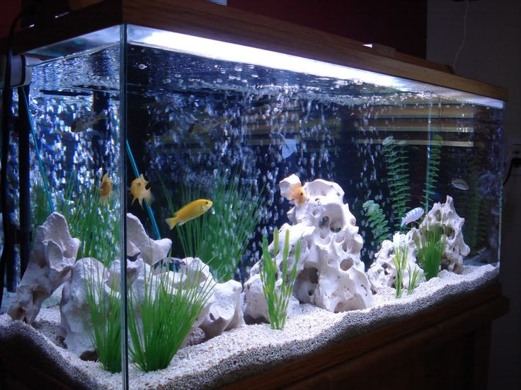 Cichlid Lighting: A Beginner's Guide