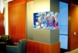 Best Aquariums are Custom Aquariums