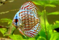 Favorite Exotic Fish for Freshwater Tanks