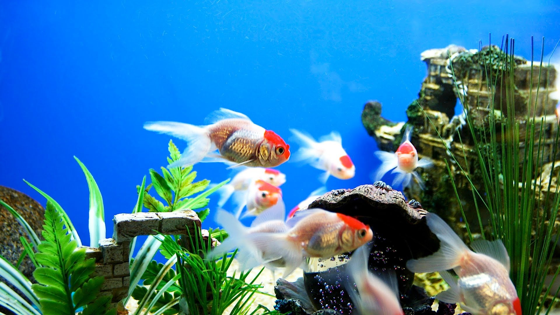What to Look For in a Good Fish Store