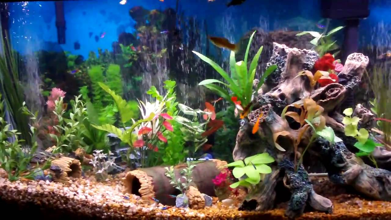 Setting up a fish tank some useful recommendations for Setting up a fish tank
