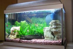 Fish Tank Aquarium Problems – No 1 Sudden Fish Deaths