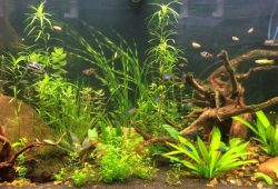 Fish Tank Aquarium Problems – No 2 Cloudiness