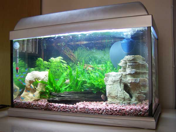 Fish tank aquarium problems no 1 sudden fish deaths for How often do you clean a fish tank