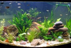 Fish Tank Decorations: a Fish's Perspective