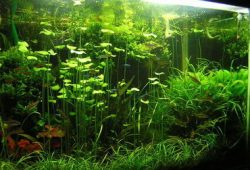 Fish Tank pH: Is It Really That Important?