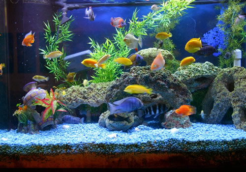 What to do When Moving House and Unable to Take Your Fish