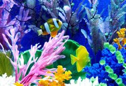 Fish Tank Decorations: Safety