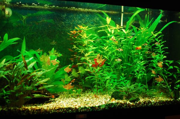 Getting Your Freshwater Aquarium Set Up