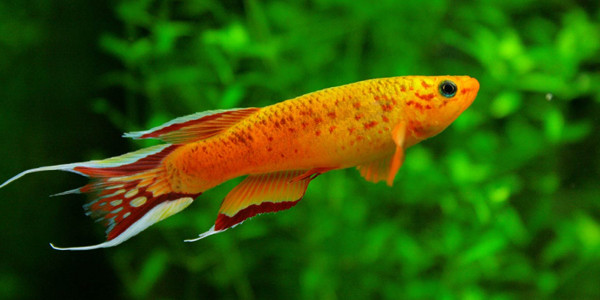 The Best Freshwater Fish