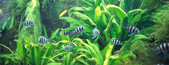 Your Freshwater Planted Aquarium Detailed Info On Subject