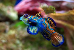 Selecting and Acclimating your Freshwater Tropical Fish
