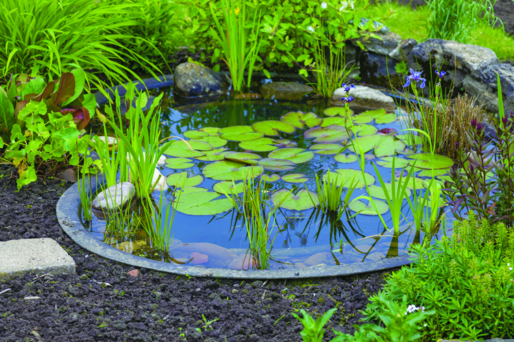 Garden Ponds Some Useful Information On Subject