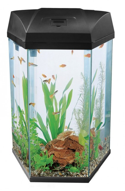 Hexagon Fish Tanks