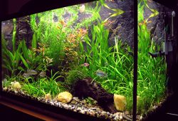 Why Choose a Home Freshwater Aquarium?
