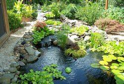 Home ponds
