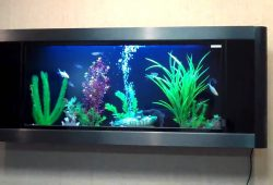 Installing a Wall Fish Tank