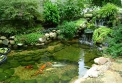 Protecting Your Koi Fish with The Right Treatment