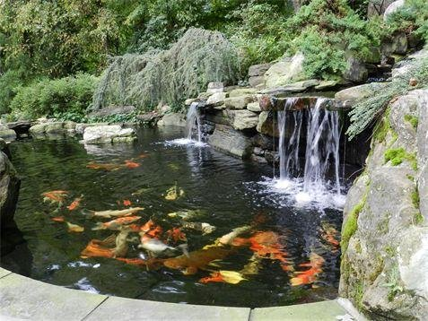 Koi Fish Supplies