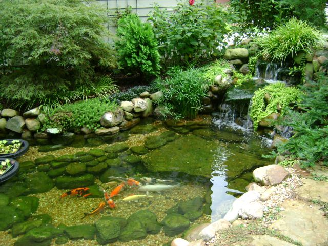 Protecting your koi fish with the right treatment useful for Fish pond protection