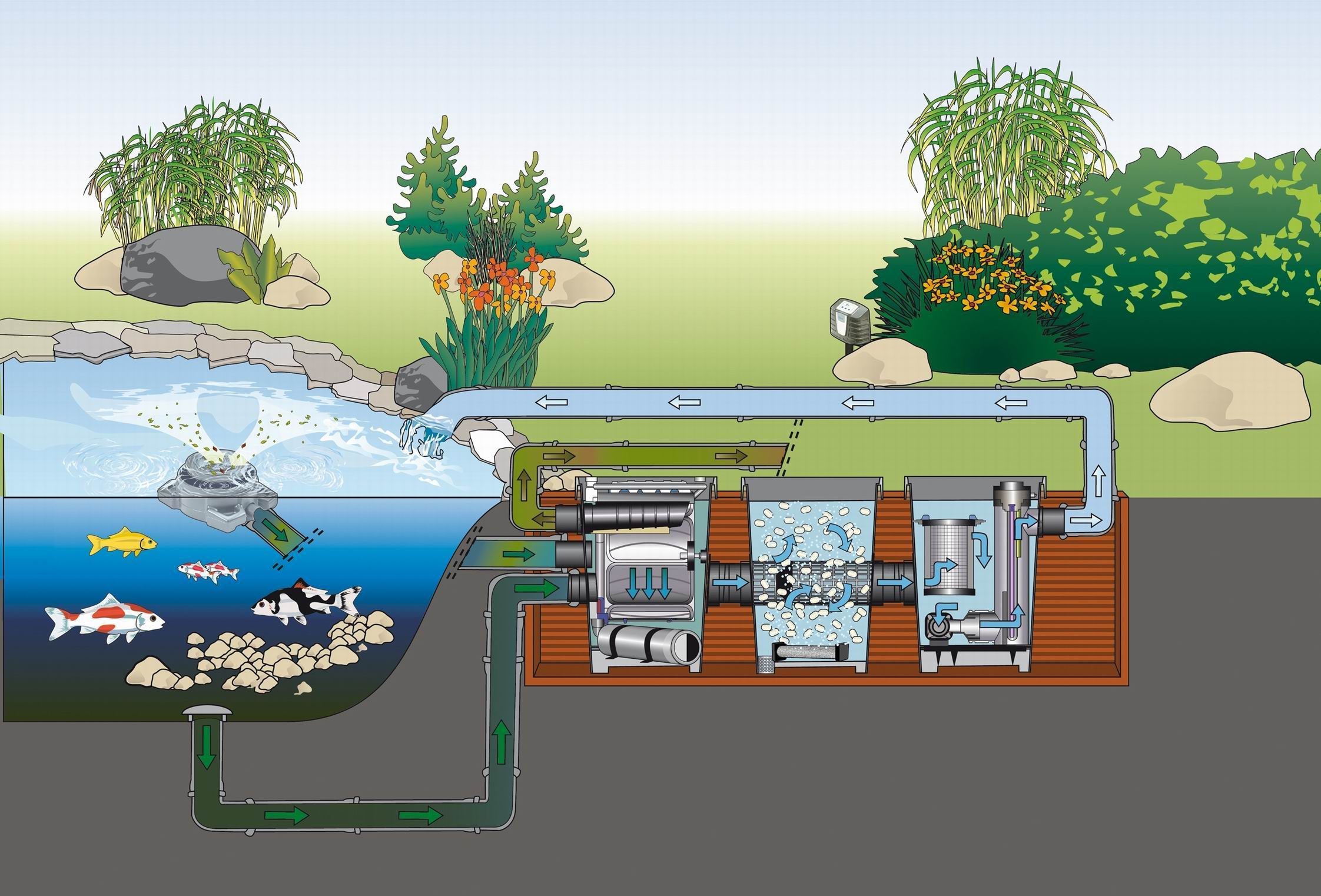 The need for a koi pond filter system guidelines on subject for Pond water purification system