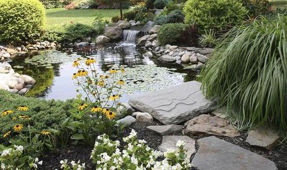 Large ponds for large gardens
