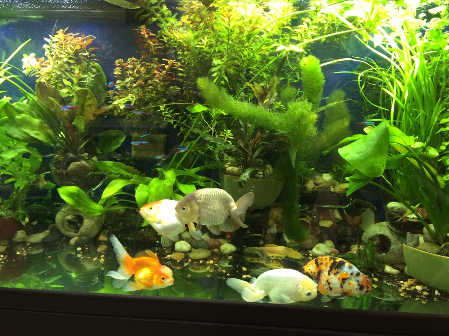 Lighting for Aquarium Plants
