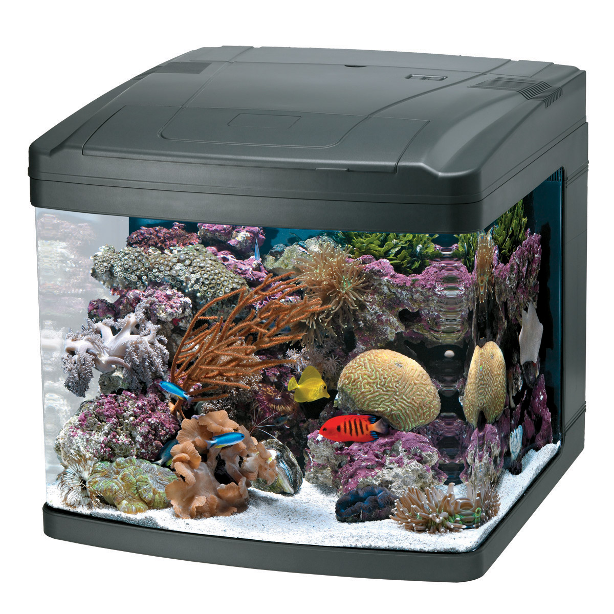 Oceanic Aquariums