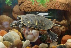 Are Pet Turtles the Right Choice for You?