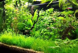 Are Plants For Aquarium Really That Necessary?