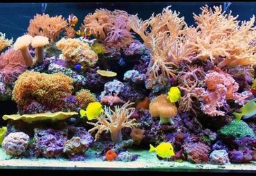 Reduce Nitrate In A Salt Water Fish Tank