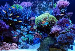 Life Time Salt Water Aquarium