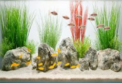 Stylish Glass Fish Tank