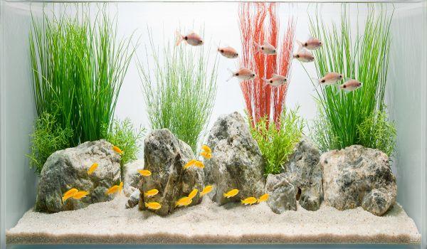 Stylish Glass Fish Tank