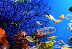 The Tropical Aquarium Fish section of Vital Information